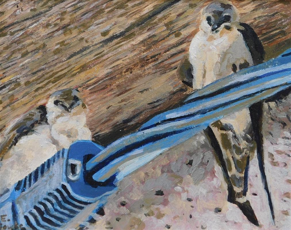 Swallows in the Eaves