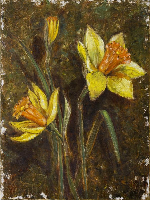A Study of a Daffodil