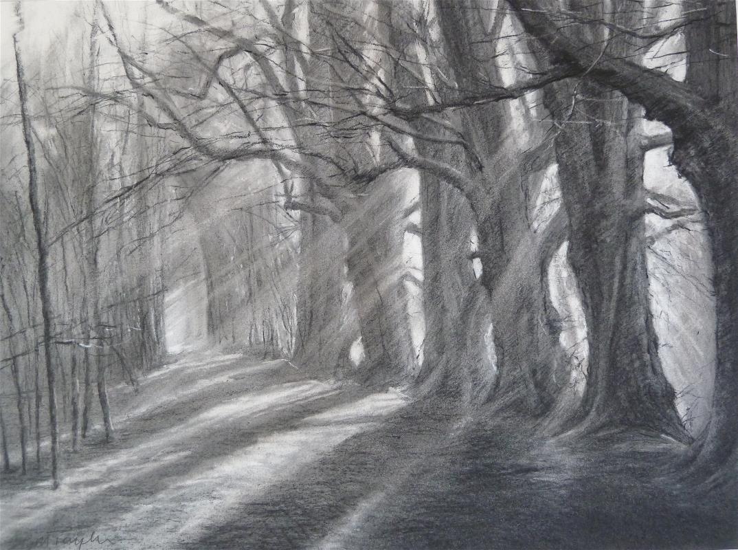 Hinchingbrooke Trees