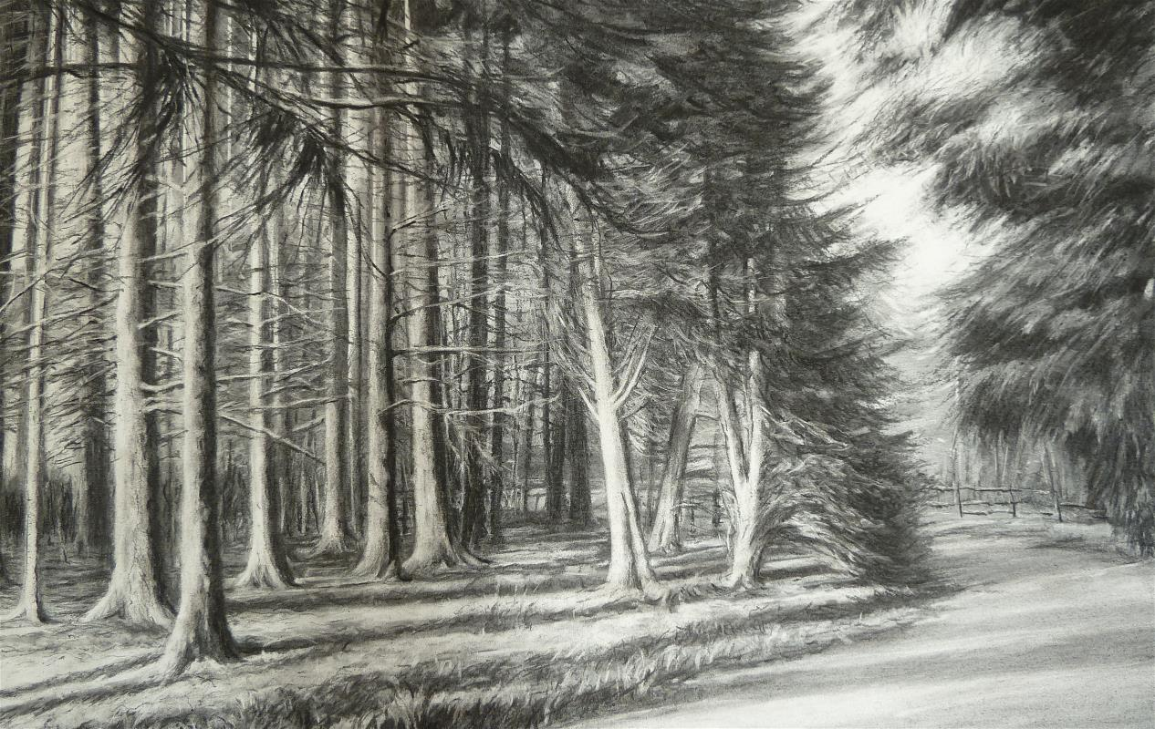 RHS Harlow Carr Woodland 2