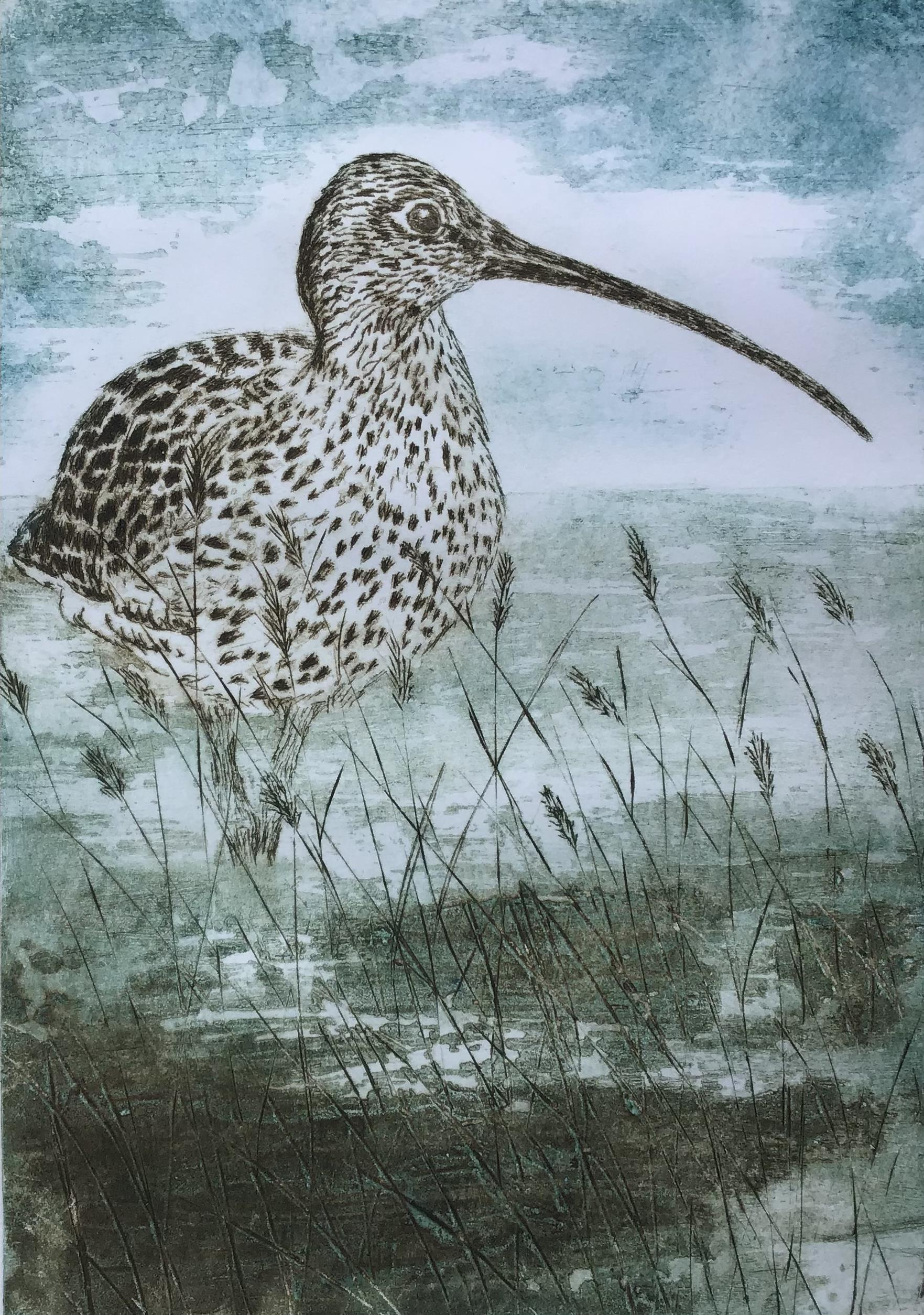 Curlew by the River Greta