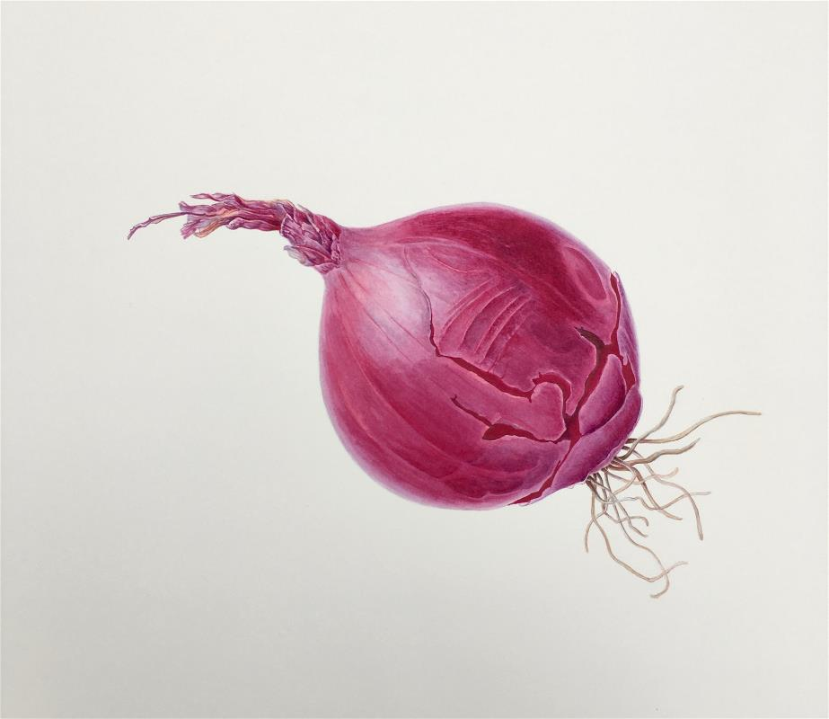 """""""Larger than Life"""" - Red Onion"""