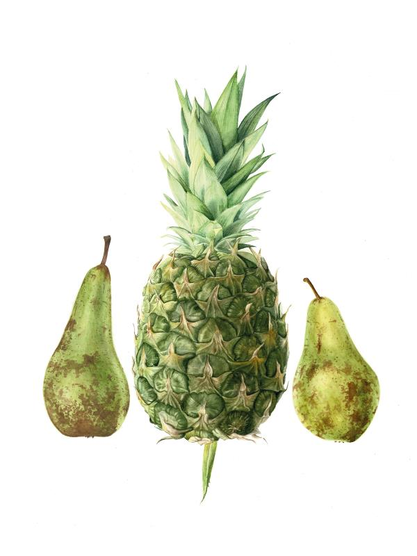 Pears and Pineapple AWARD: Vintage Paper Co: Best use of paper in any medium