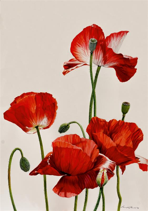 Opium Poppy - AWARD: Exhibiting Excellence - For the most inspiring use of colour