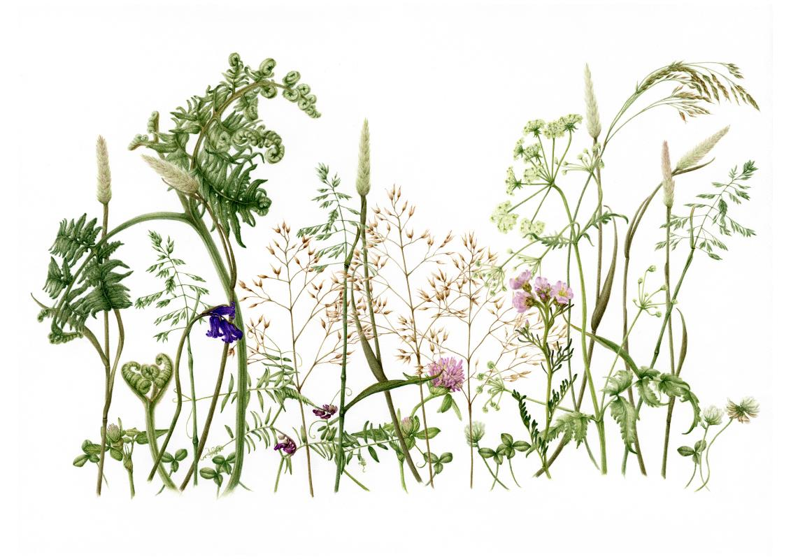 Wildflower Meadow - AWARD: Certificate of Botanical Merit & Exhibiting Excellence in the depiction of wild flora