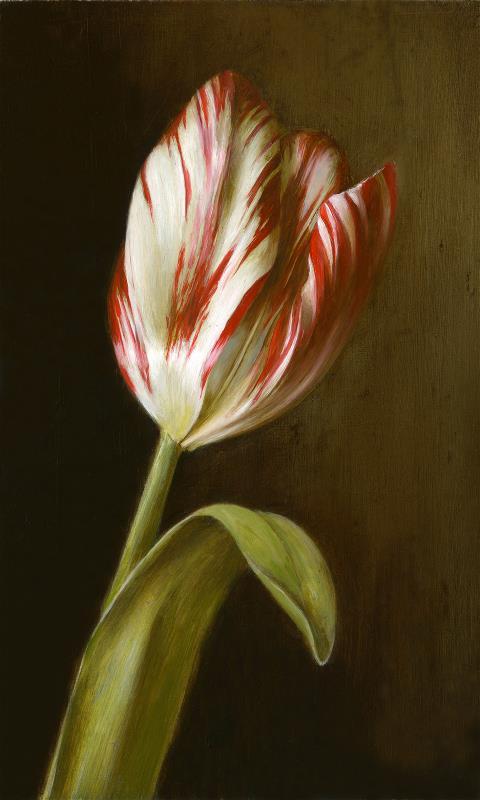 Zilver Standaard Dutch Heritage tulip, 1760 - AWARD: Exhibiting Excellence in Oil