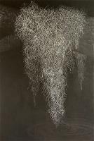 The legend of Gorez Goz (Spanish moss)