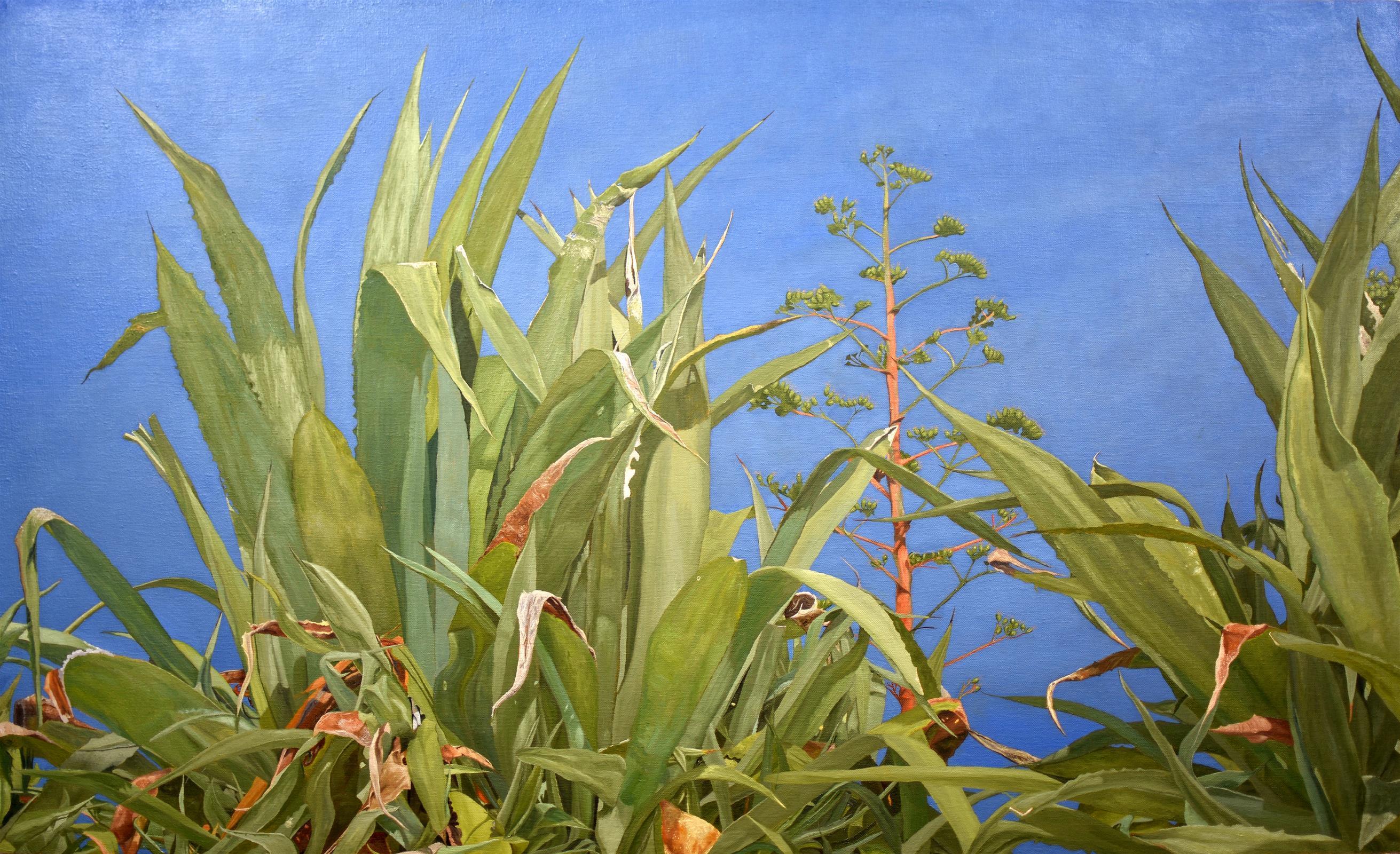 Wild Aloe Vera of Mare Monte