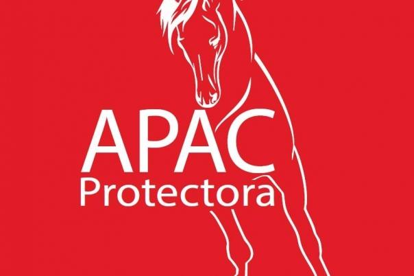 APAC Caballos Rescue Horses