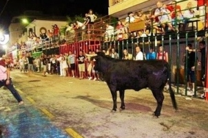 "Fiestas in Calpe: ""Bous Al Carrer"" (August 2019)"