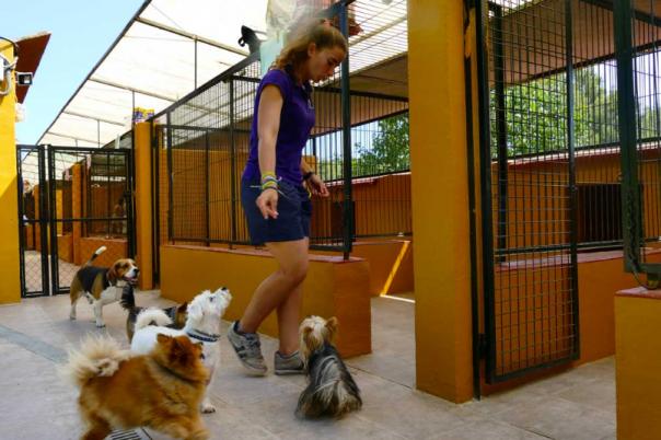 Clinica Veterinaria Aliaga - Veterinary Clinic, Kennels & Cattery