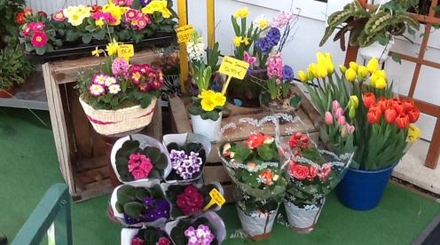 Mayflower Flores y Plantas - Florist - Floristeria Javea