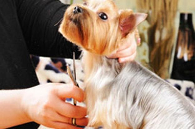 Mr Dog Pet Grooming Salon Amp Shop Pet Shops Amp Grooming In