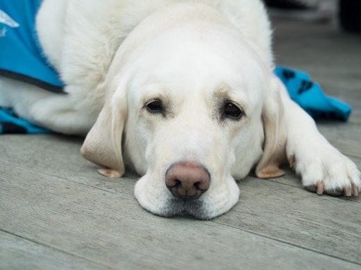 Vets in Javea - Guide to Treatments