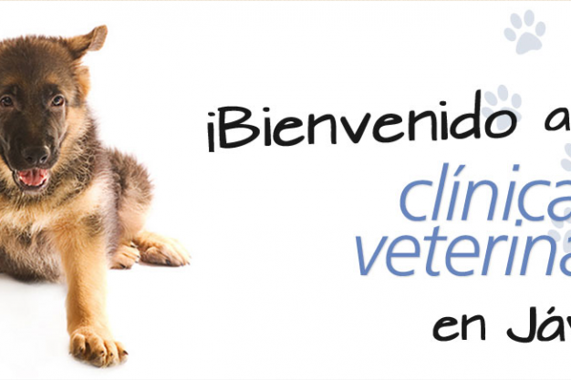 Clinica Veterinaria El Puerto - Vet in Javea Port