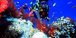 Dive Underwater in Kenya