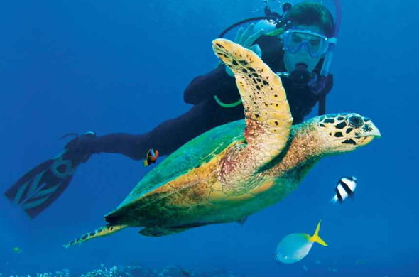 Chase the rush: Go scuba diving