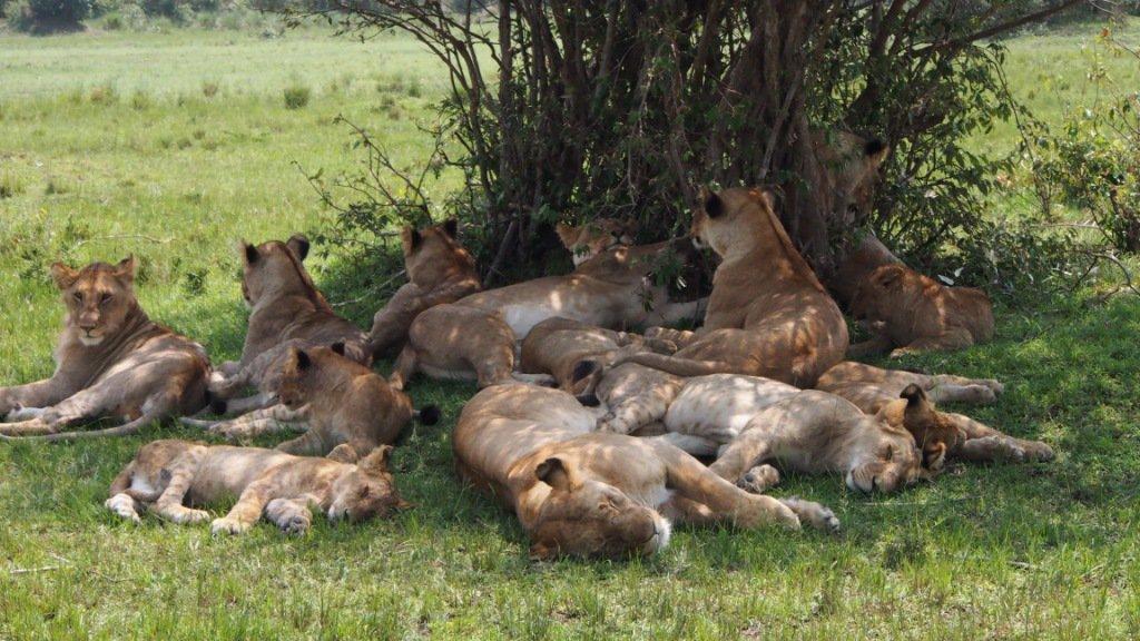 Go on a 3 Day Safari in Kenya