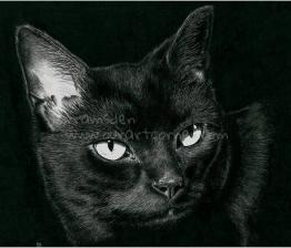 Ink cat