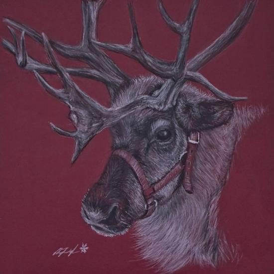 Reindeer - One of Eight