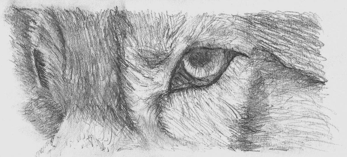 wolf eye practice