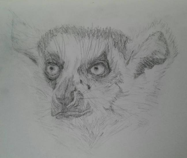 its a lemur this time