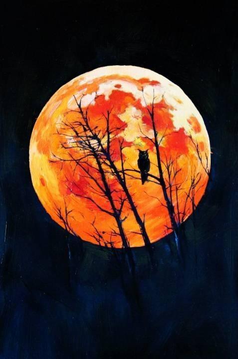 Owl moon.