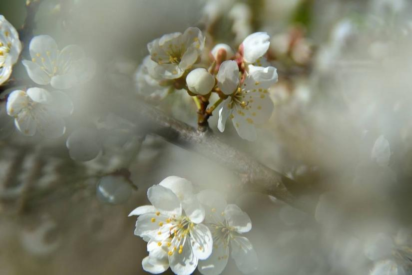 Mistical flowering