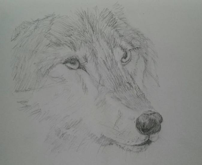 wolf head for the (how many times now?)