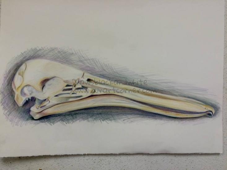 Pelican study