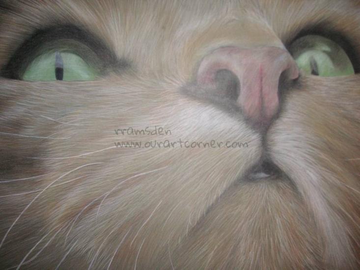Colour pencil cat