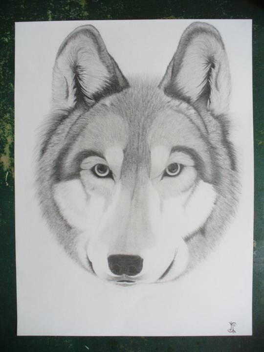 Wolf 10/2011
