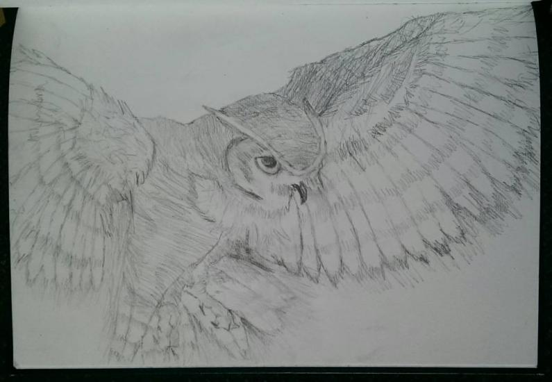 an owl drawing