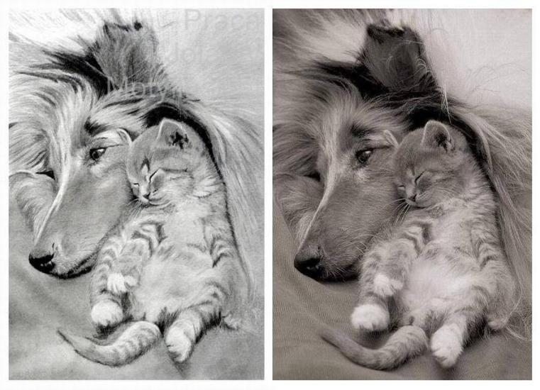 Collie with a Kitten