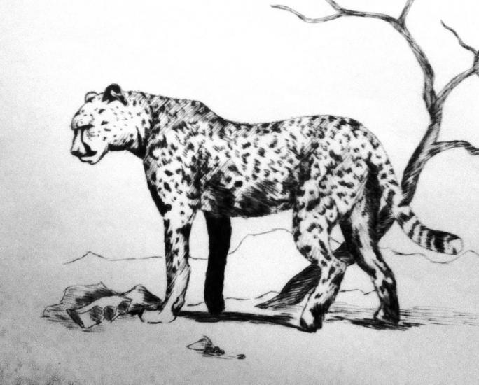 cheetah practice