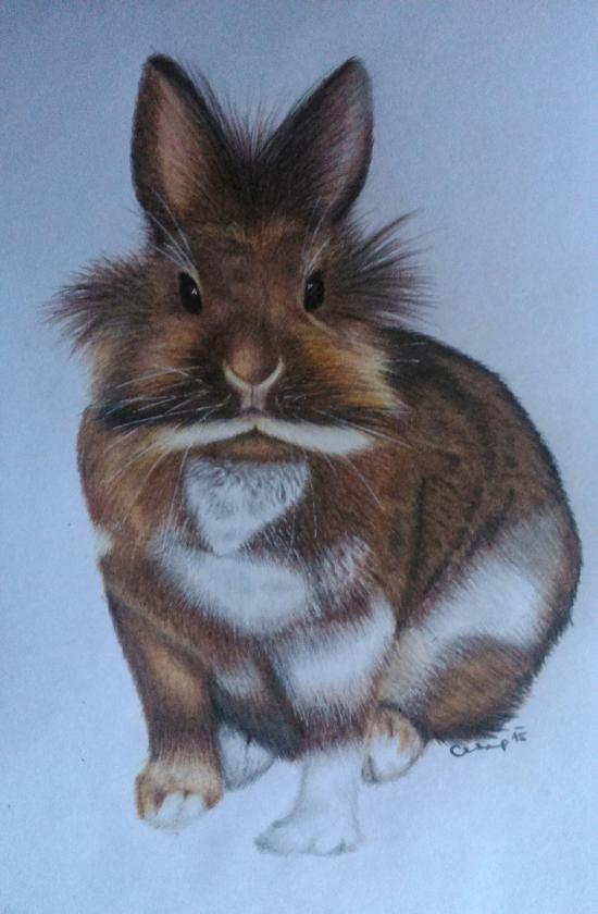 Bunny drawing