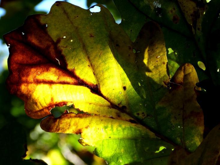 Leaf 'n sunlight