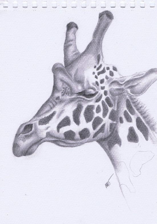 Giraffe Head study