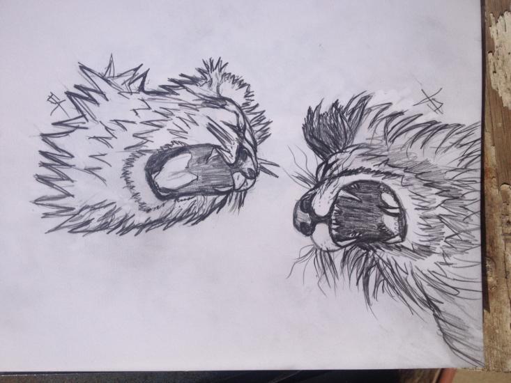Lion study for tattoo design.