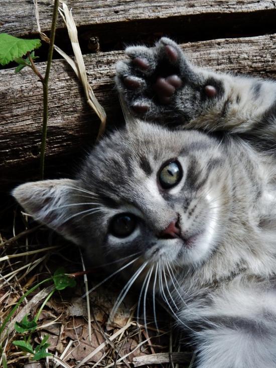 Chaton / Kitten