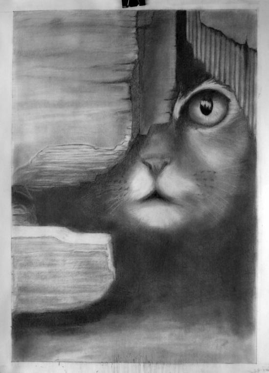 gattino -  Saving one Animal