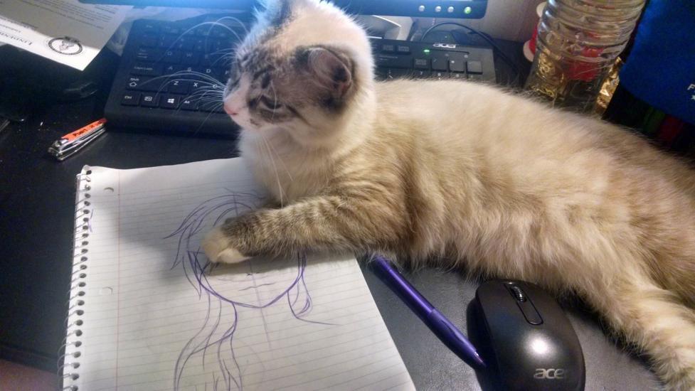 Struggles Of An Artist: Cats