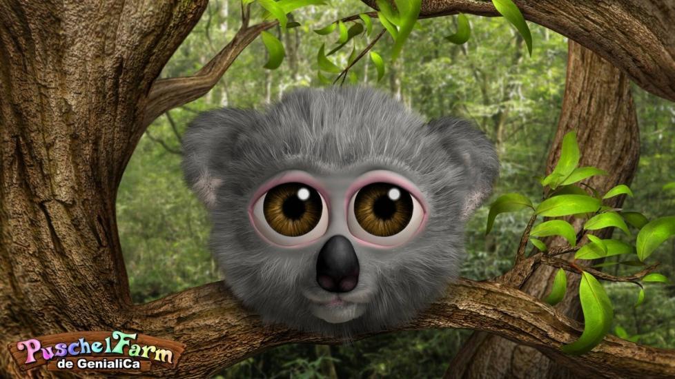 Koala Puschel