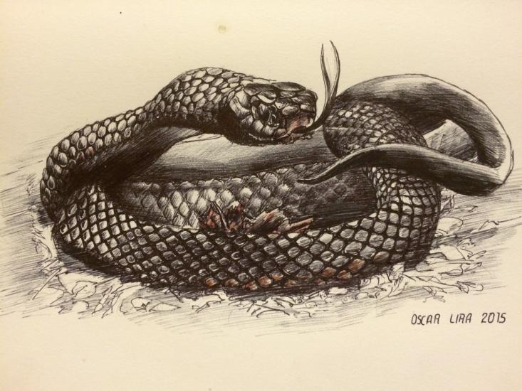 модные картинки змей карандашом в цветах лекарственная растение