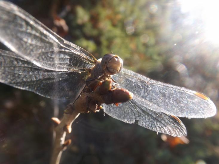 Dragonfly in sunshine