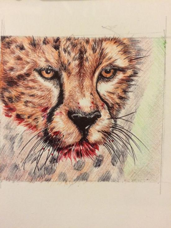 Cheeta face