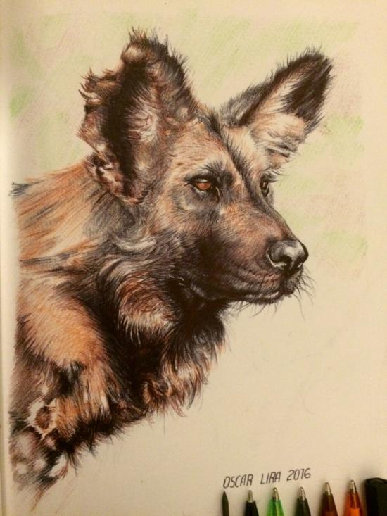 Wild dog (final)