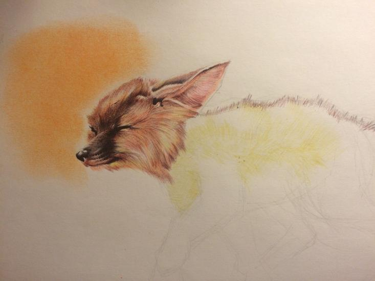 Fennec fox WIP