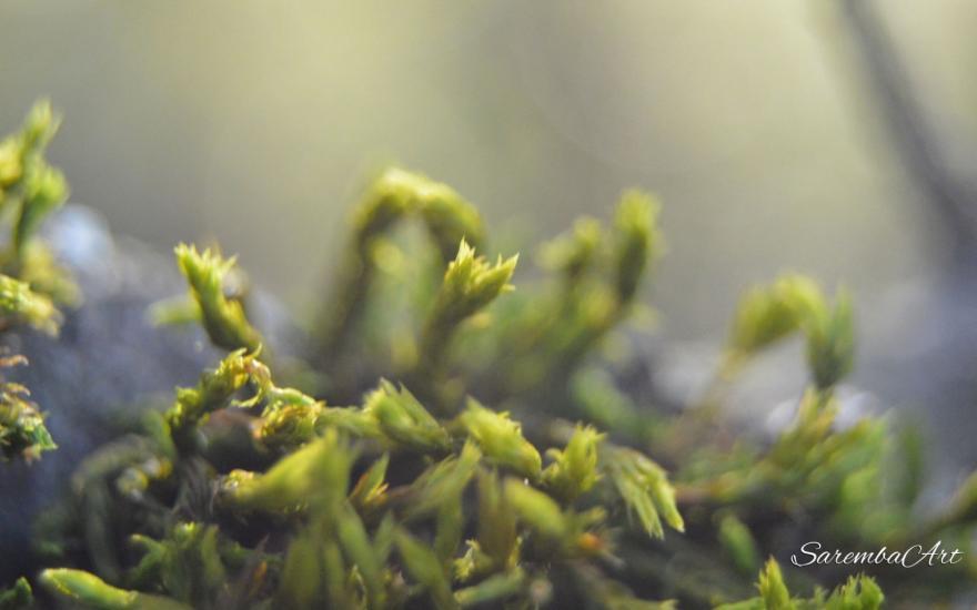 Nature's Art - Moss