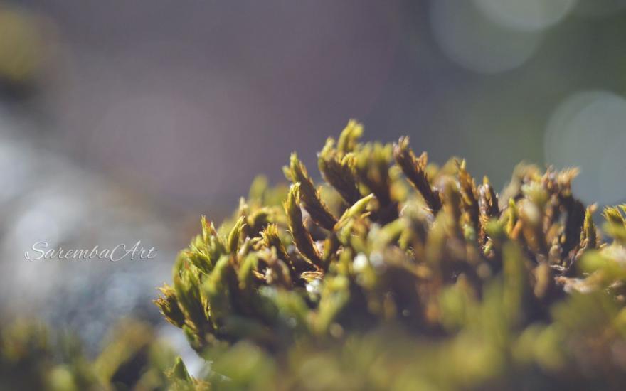 Nature's Art - The Moss